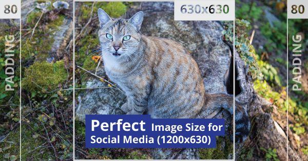 Optimale Bildgröße für Soziale Medien